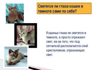 Светятся ли глаза кошки в темноте сами по себе? Кошачьи глаза не светятся в