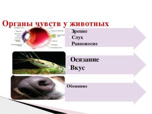 Органы чувств у животных