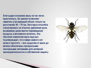 Благодаря осязанию муху не так легко прихлопнуть. Ее зрение позволяет заметит