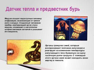 Датчик тепла и предвестник бурь Медуза слышит недоступные человеку инфразвуки