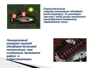 Поразительным электролокатором обладает рыба мормирус. В основании хвоста у э