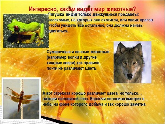Интересно, каким видят мир животные? Лягушка видит только движущиеся предметы...