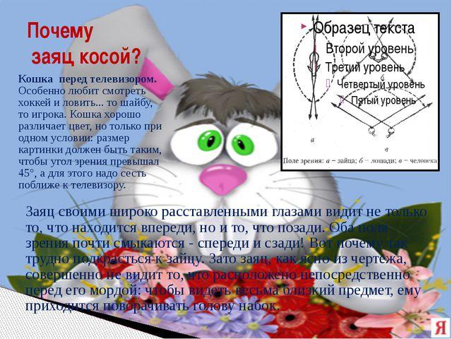 Почему заяц косой? Заяц своими широко расставленными глазами видит не только...