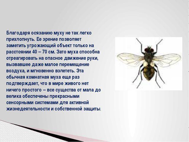 Благодаря осязанию муху не так легко прихлопнуть. Ее зрение позволяет заметит...