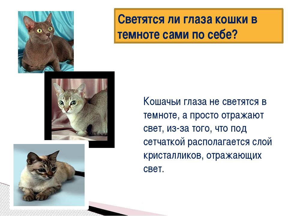 Светятся ли глаза кошки в темноте сами по себе? Кошачьи глаза не светятся в...