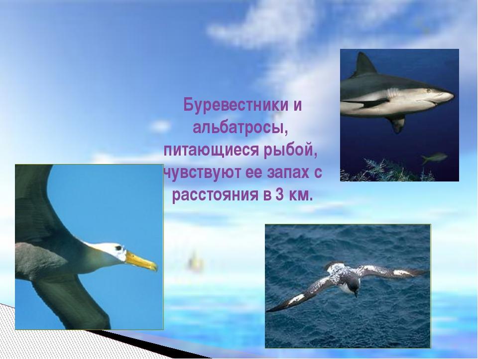 Буревестники и альбатросы, питающиеся рыбой, чувствуют ее запах с расстояния...