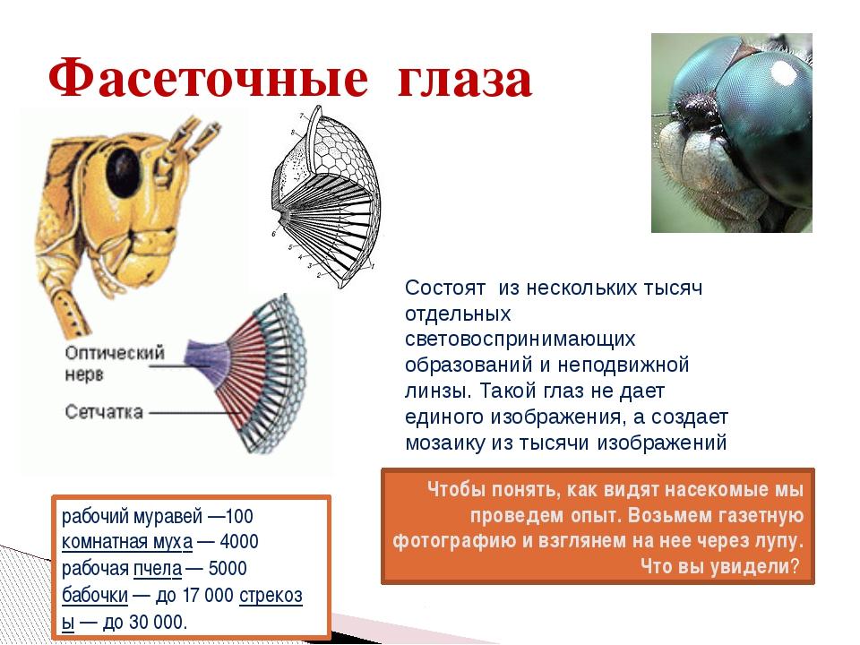Фасеточные глаза Чтобы понять, как видят насекомые мы проведем опыт. Возьмем...
