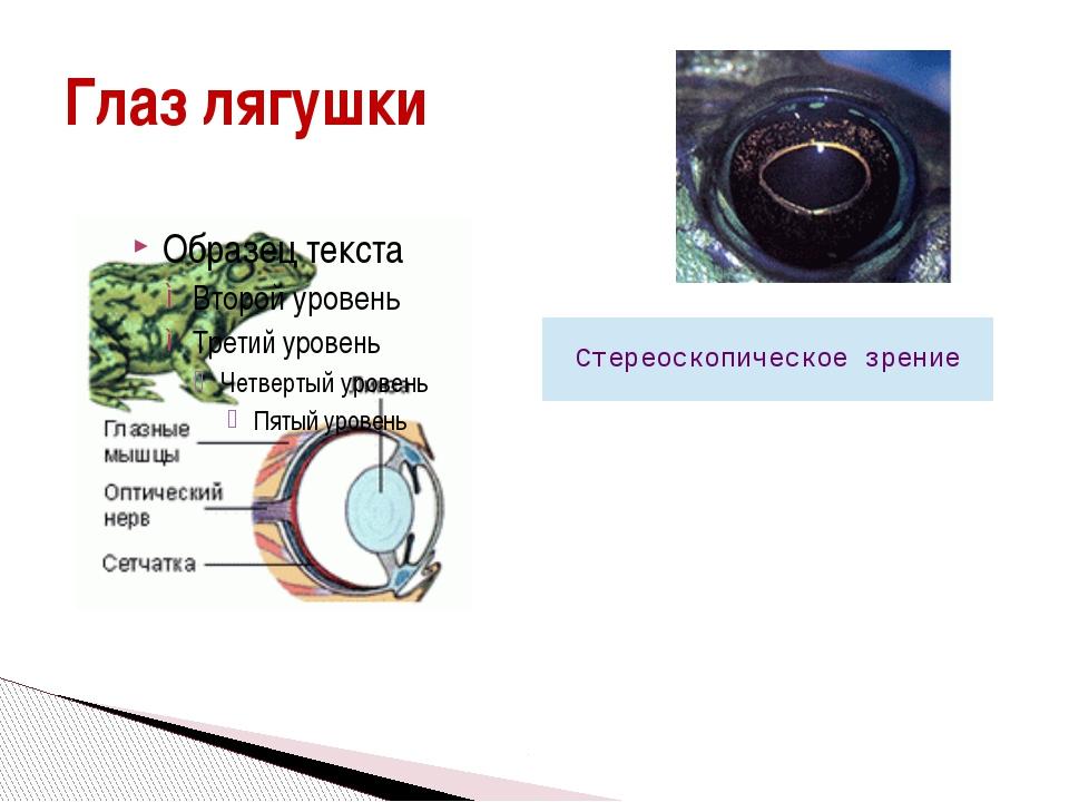 Глаз лягушки Стереоскопическое зрение