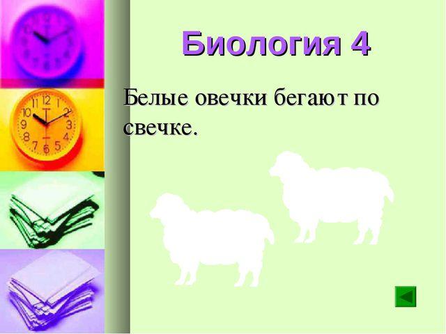 Биология 4 Белые овечки бегают по свечке.