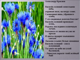 Александр Краснов Василёк осенний лепестками неба, украшая поле, на ветру сто