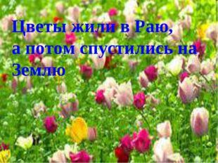 Цветы жили в Раю, а потом спустились на Землю