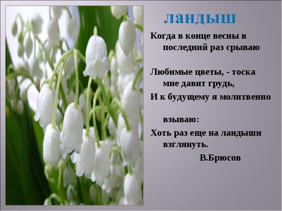 Когда в конце весны в последний раз срываю Любимые цветы, - тоска мне давит г...