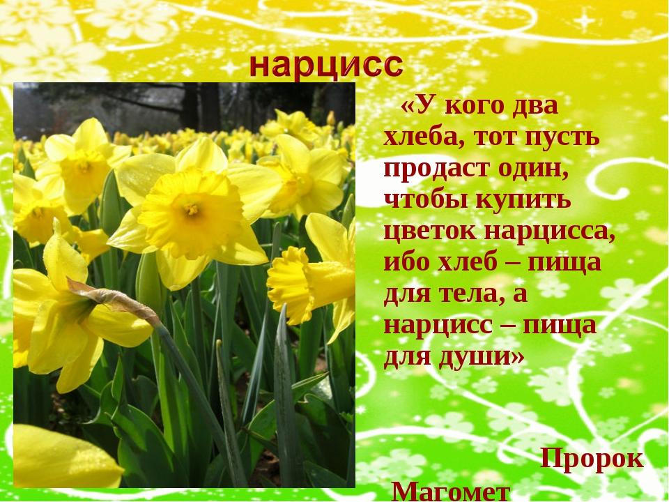 «У кого два хлеба, тот пусть продаст один, чтобы купить цветок нарцисса, ибо...