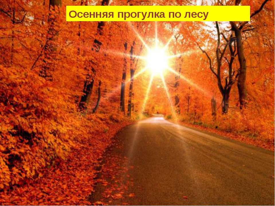 Осенняя прогулка по лесу