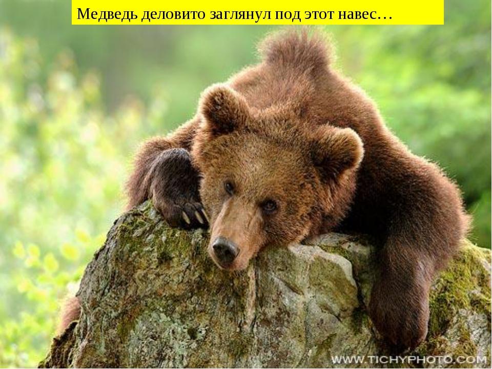 Медведь деловито заглянул под этот навес…