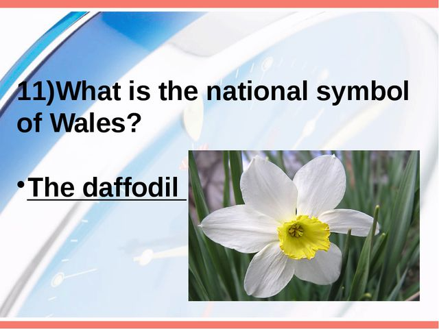 11)What is the national symbol of Wales? The daffodil