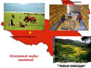 Рисовые плантации Основные виды занятий Урожай кукурузы Чайные плантации Коче