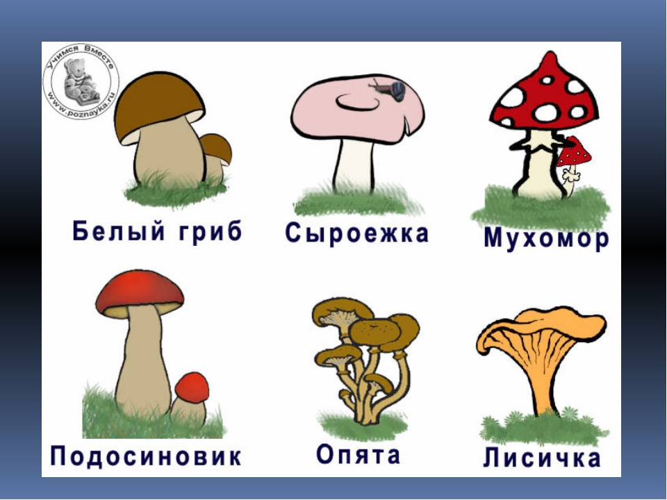 Рисунок грибы с названиями