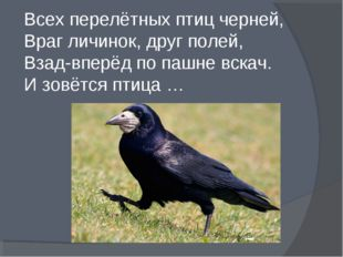 Всех перелётных птиц черней, Враг личинок, друг полей, Взад-вперёд по пашне
