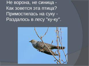 Не ворона, не синица - Как зовется эта птица? Примостилась на суку - Раздало