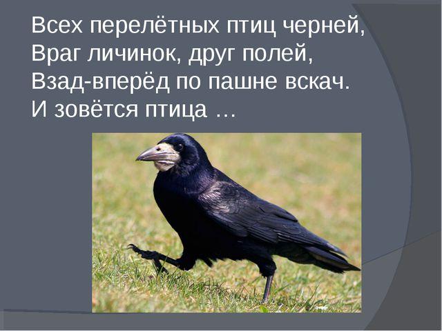 Всех перелётных птиц черней, Враг личинок, друг полей, Взад-вперёд по пашне...