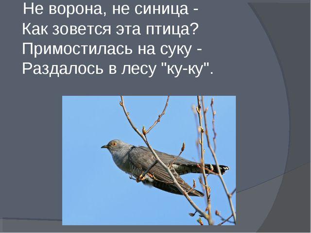 Не ворона, не синица - Как зовется эта птица? Примостилась на суку - Раздало...
