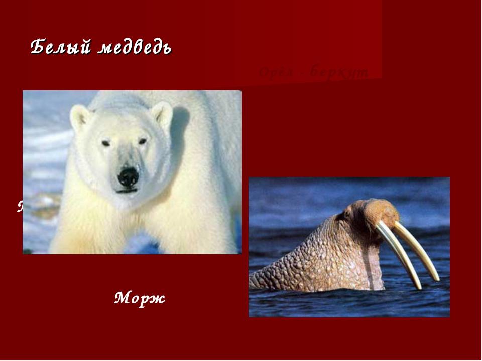 Белый медведь Морж Морж Орёл - беркут