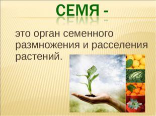 это орган семенного размножения и расселения растений.