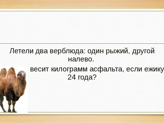 Летели два верблюда: один рыжий, другой налево. Сколько весит килограмм асфа...