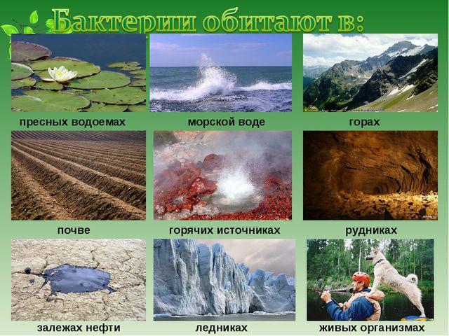 пресных водоемах почве залежах нефти ледниках горячих источниках морской вод...