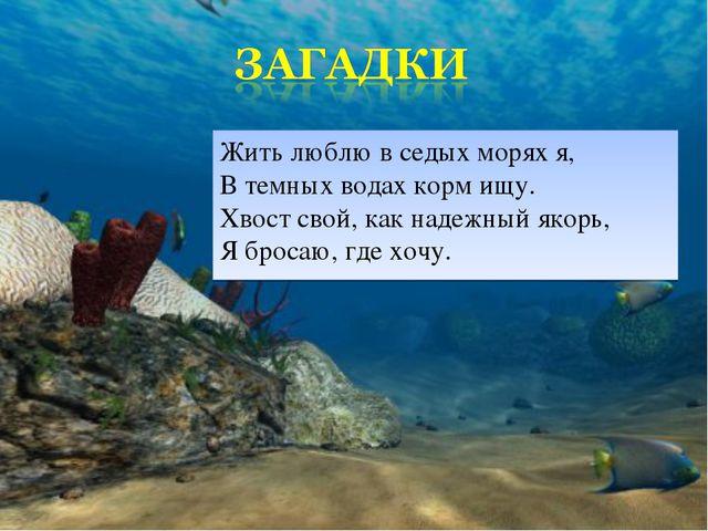 Жить люблю в седых морях я, В темных водах корм ищу. Хвост свой, как надежный...