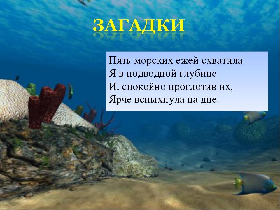 Пять морских ежей схватила Я в подводной глубине И, спокойно проглотив их, Яр...
