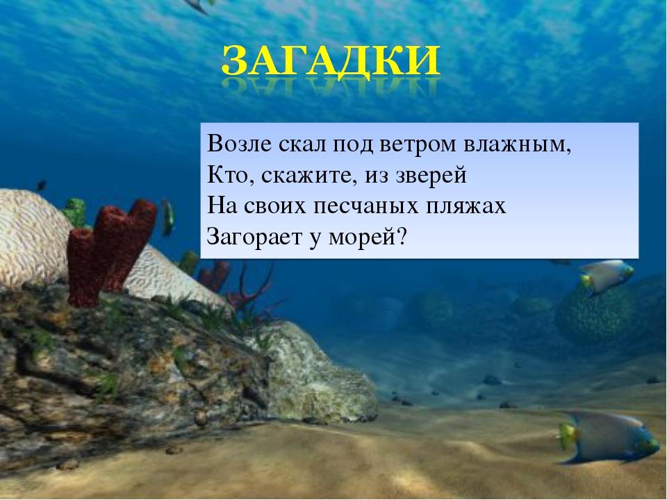 Возле скал под ветром влажным, Кто, скажите, из зверей На своих песчаных пляж...