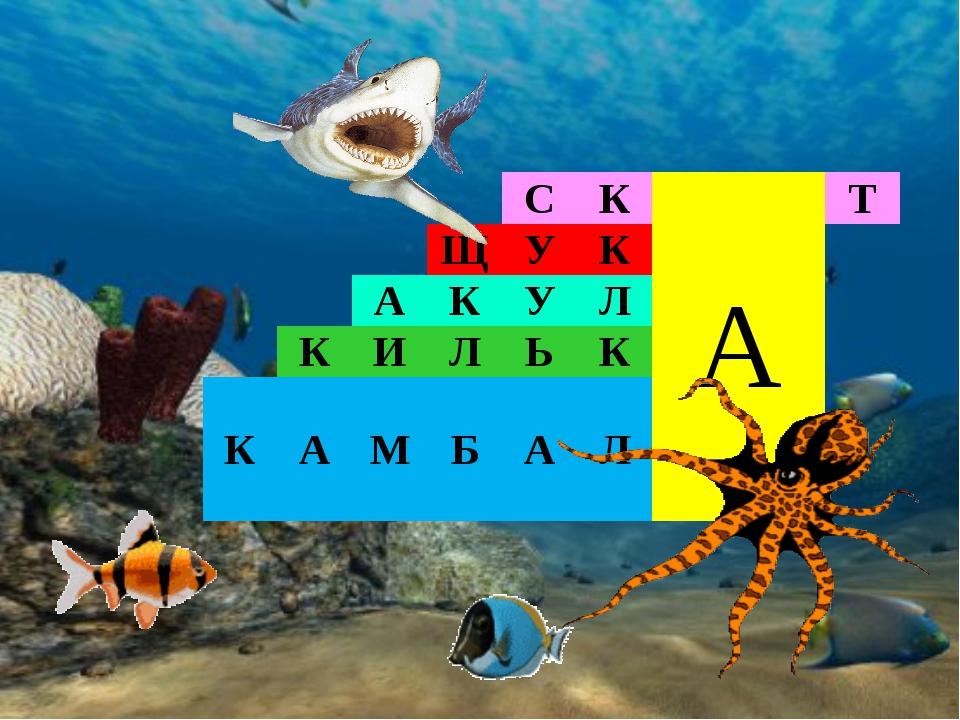 СКАТ ЩУК АКУЛ КИЛЬК КАМБАЛ
