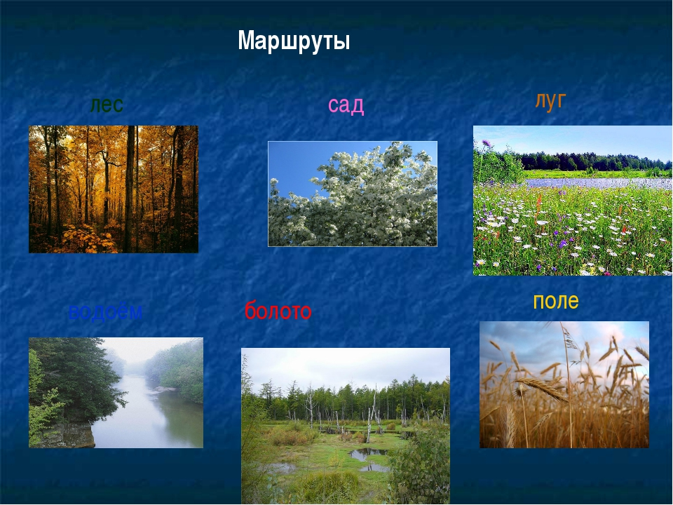 Маршруты лес поле сад водоём болото луг