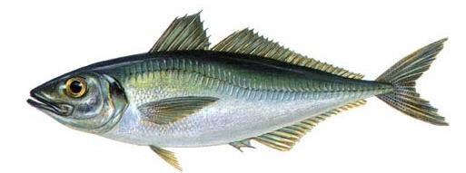http://fishingkuban.ru/uploads/posts/2012-08/1344320128_stavrida.jpeg