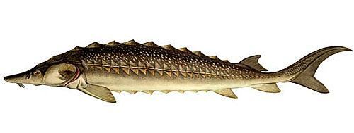 http://fish-book.ru/images/295.jpg