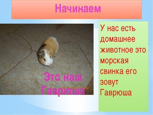 У нас есть домашнее животное это морская свинка его зовут Гаврюша Начинаем Эт...