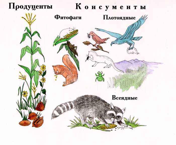 http://beznadegi.narod.ru/Trofi/images/konsumenty_producenty.jpg