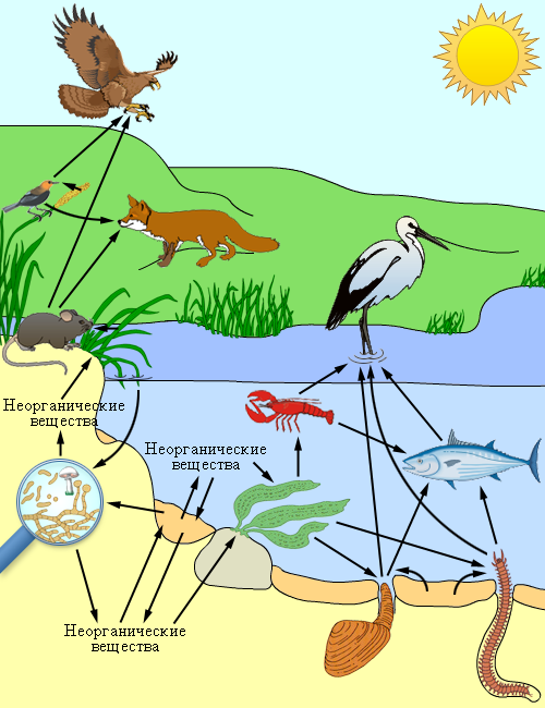 http://biology.ru/course/content/chapter12/section1/paragraph2/images/12010202.png