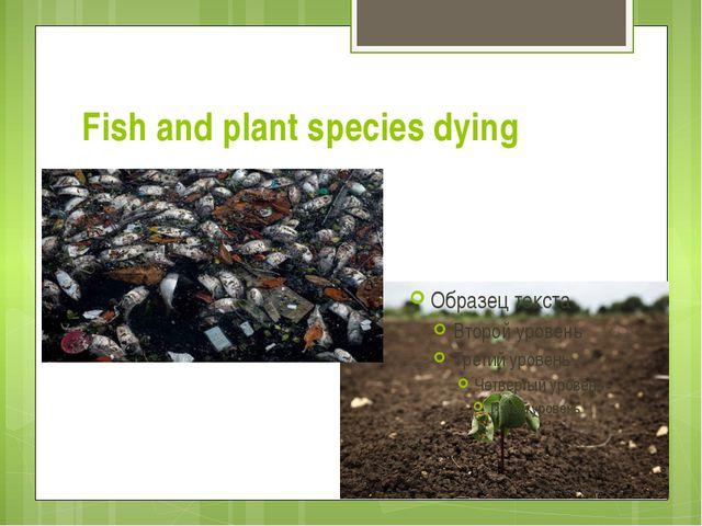 Fish and plant species dying