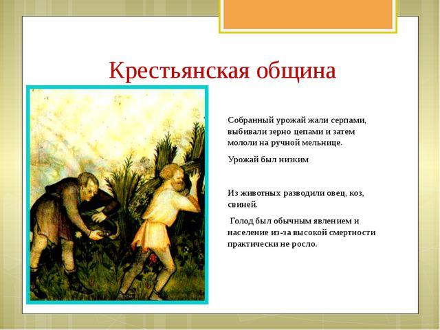 Собранный урожай жали серпами, выбивали зерно цепами и затем мололи на ручной...
