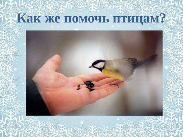 Как же помочь птицам?