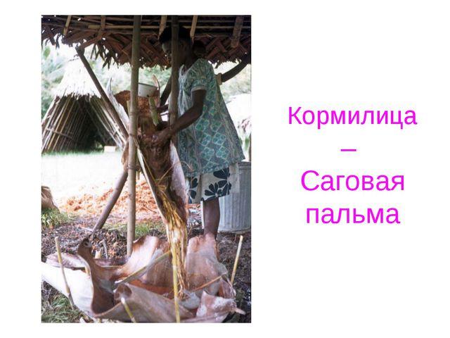Кормилица – Саговая пальма