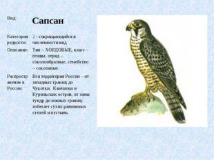 Вид: Сапсан Категория редкости:2 - сокращающийся в численности вид Описани