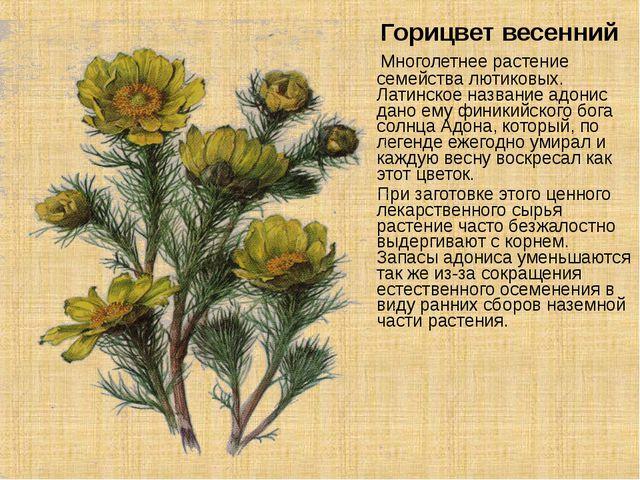 Горицвет весенний Многолетнее растение семейства лютиковых. Латинское назван...
