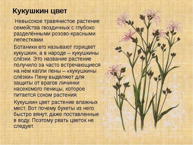 Кукушкин цвет Невысокое травянистое растение семейства гвоздичных с глубоко...