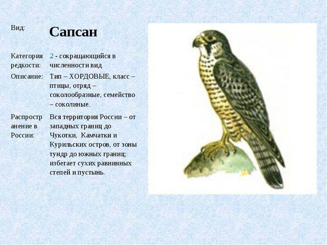Вид: Сапсан Категория редкости:2 - сокращающийся в численности вид Описани...