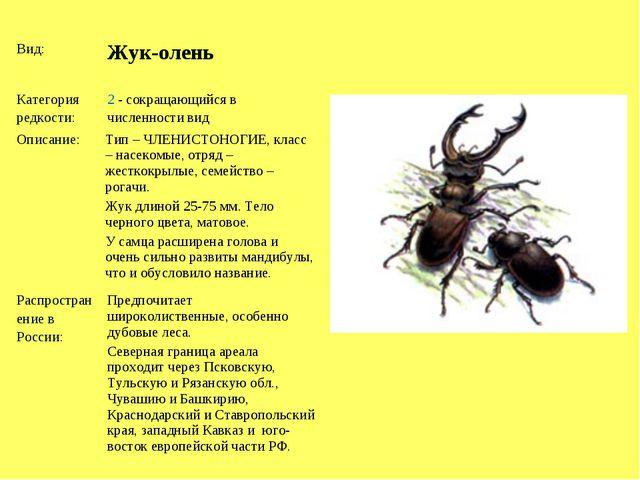 Вид: Жук-олень Категория редкости:2 - сокращающийся в численности вид Опис...