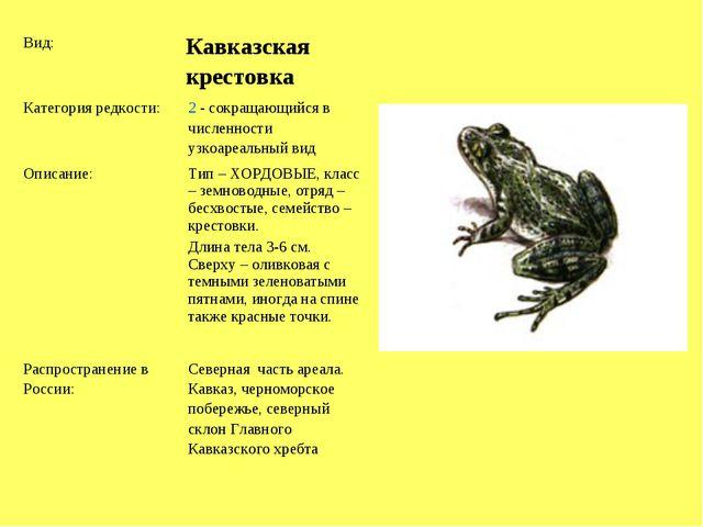 Вид: Кавказская крестовка Категория редкости:2 - сокращающийся в численнос...